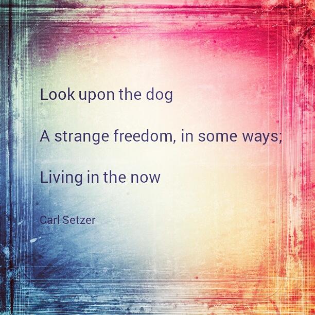 Consider The Dog