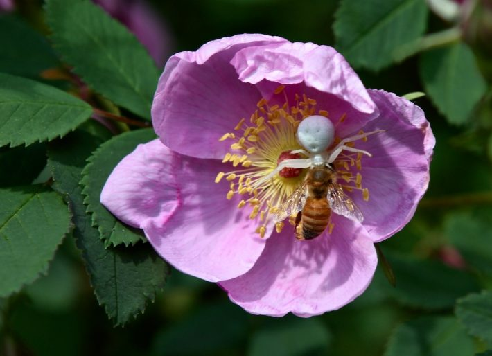 wild-rose-honey-3-710x514