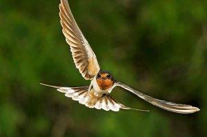 songbirds_birding_basics