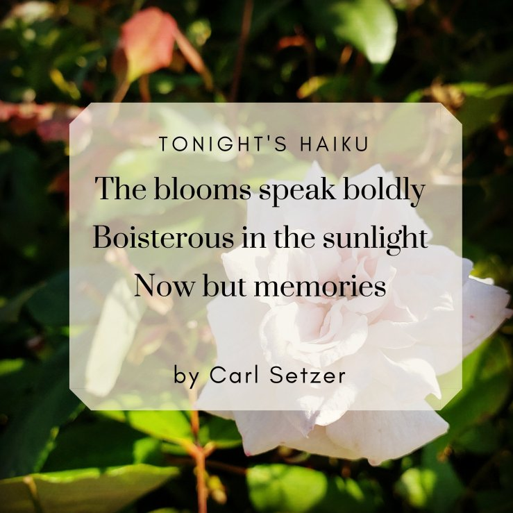 The blooms speak boldly, Boisterous in the sunlight,  Now but memories
