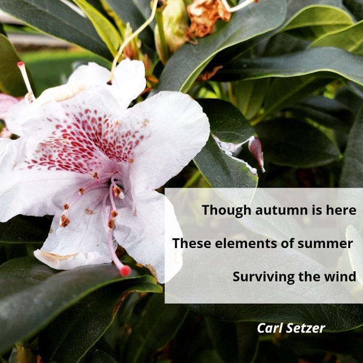 Summer's Remnants: A Haiku